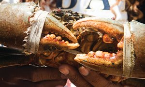 fresh crab from Jaffna market.