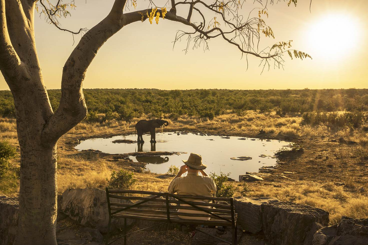 'I so regret going on that safari' said no one ever © Buena Vista Images / Getty Images