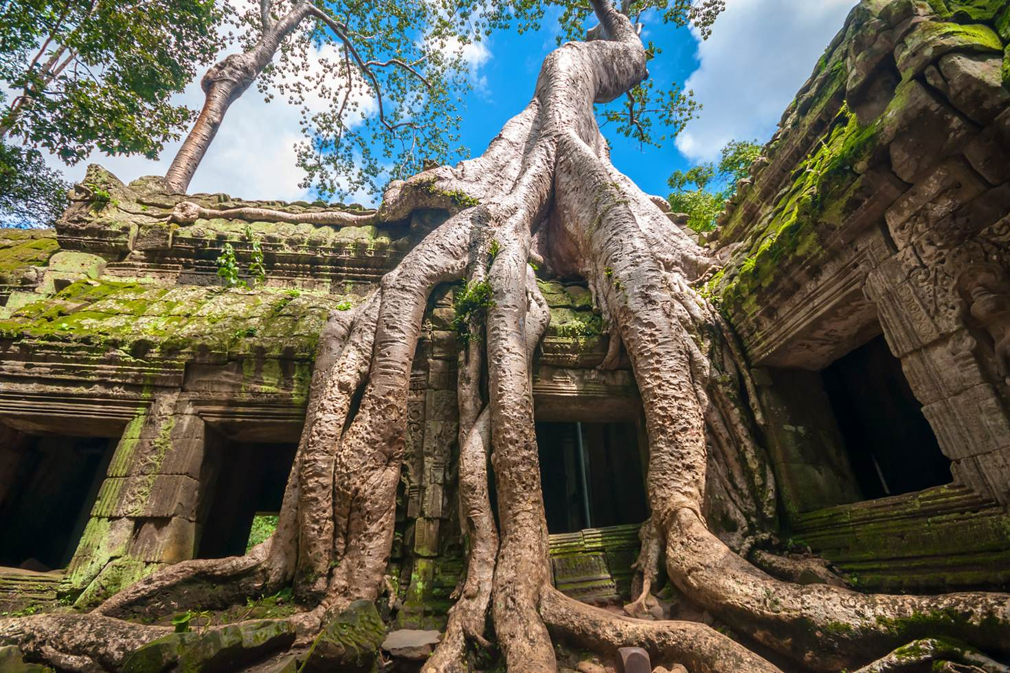 Ancient Khmer architecture ,Ta Prohm temple ruins hidden in jungle in Siem Reap, Cambodia. Ta Prohm is a jungle temple in Angkor.